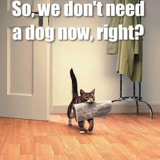 Karen Cat Memes  funny