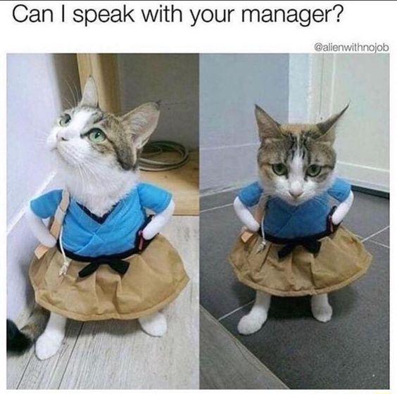 Karen Cat Memes