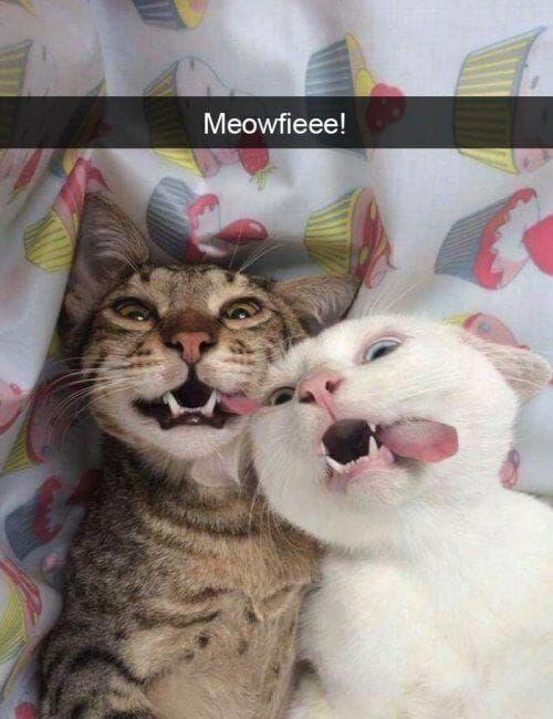 karen memes with cats