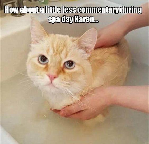 Karen, You and Those Cat Memes