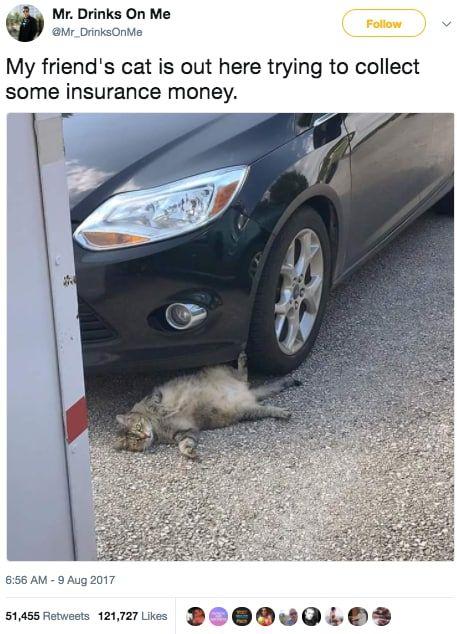 Karen Memes cat