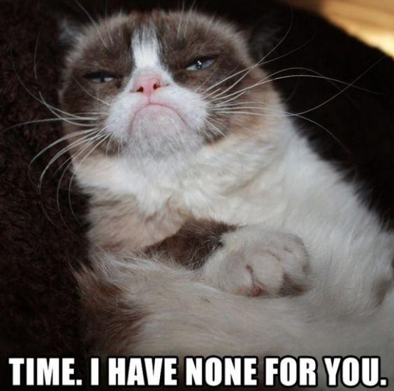 cat and karen memes