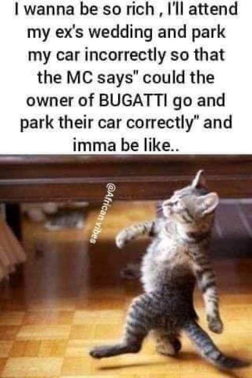 cat lunch memes