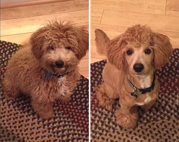 Dog First Haircut