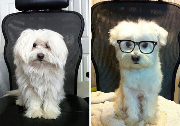 small dog haircuts