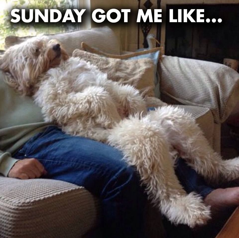 Sunday dog break memes and funday