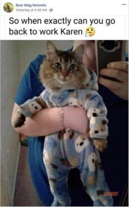 funny cat memes karen