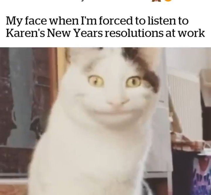 karen and cat memes