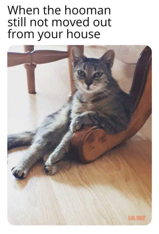 karen the cat meme