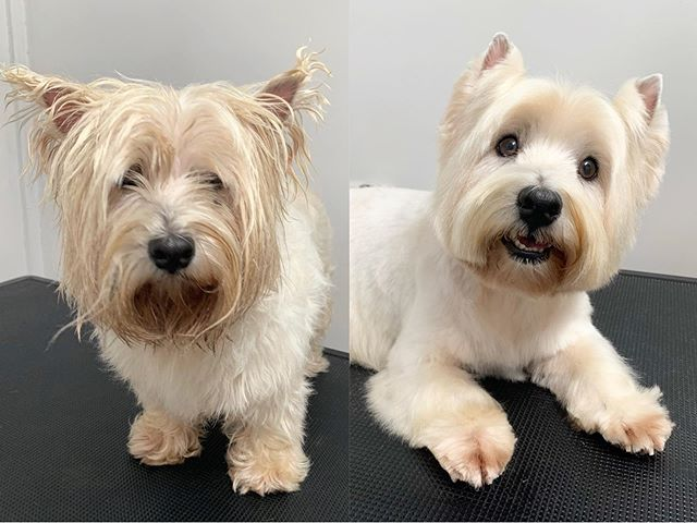 how to give a dog a haircut