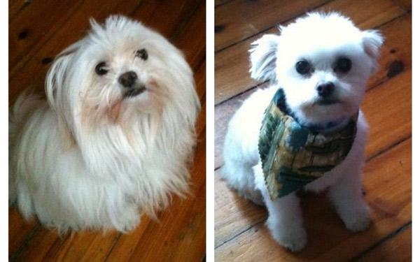 funny dog haircuts