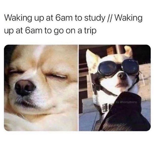 Funny Af Travel meme