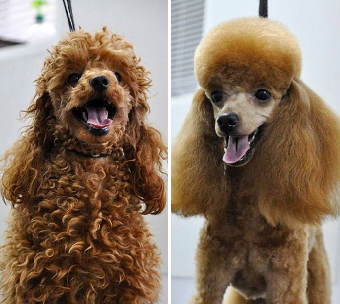 types of dog haircuts