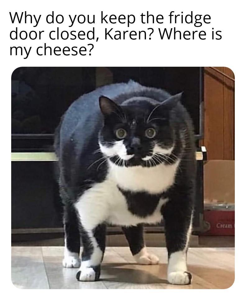 karen meme cat
