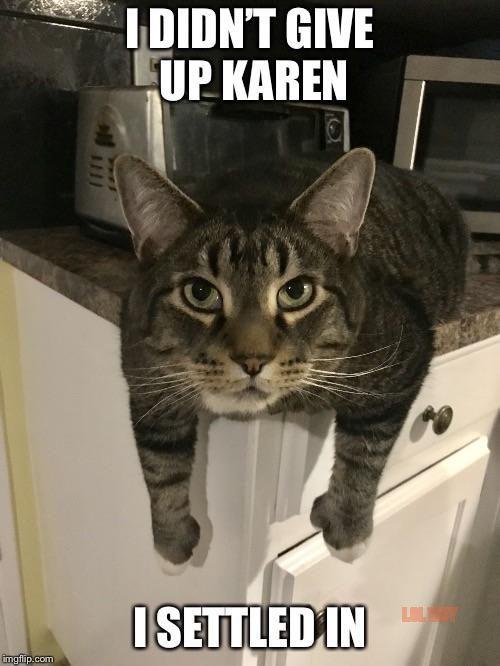cat karen memes