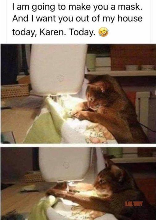 karen memes with cat