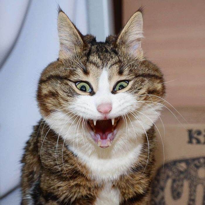 Funny Cats Faces